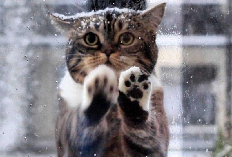 На Кубани объявили экстренное предупреждение из-за сильных дождя и снега