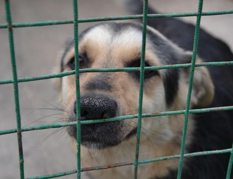 Зверье мое: приют для собак построят в Краснодаре