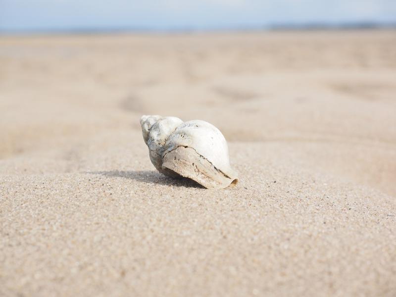 Член РГО планирует найти остатки «Атлантиды» на дне Краснодарского водохранилища