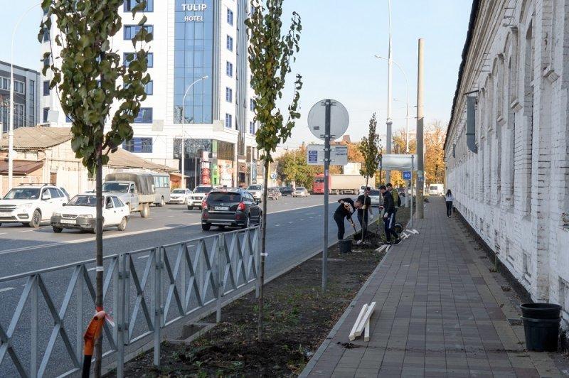 На Суворова в Краснодаре посадят деревья и сделают вертикальное озеленение