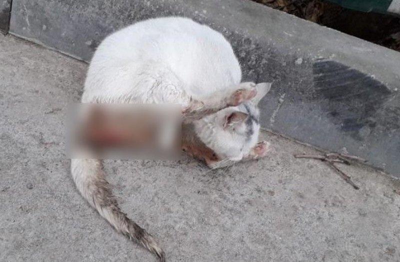 Подростки в Новороссийске изнасиловали кошку