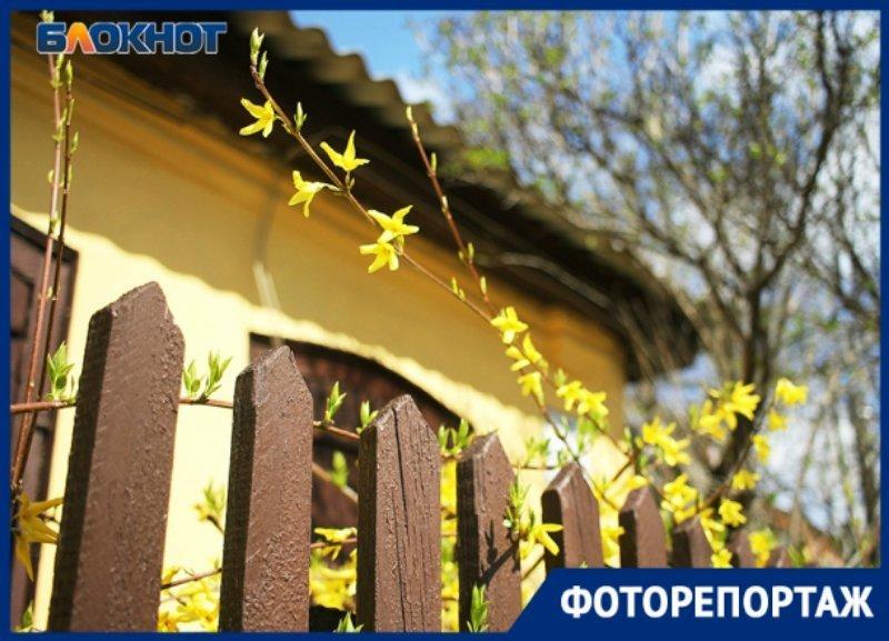 Яркий весенний день в Краснодаре