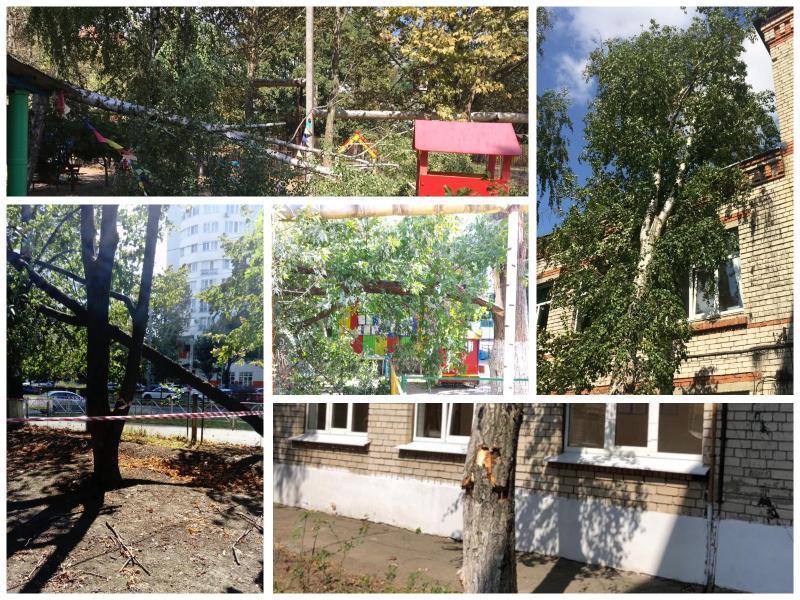Стало известно, сколько деревьев не досчиталась мэрия Краснодара после сильного ветра