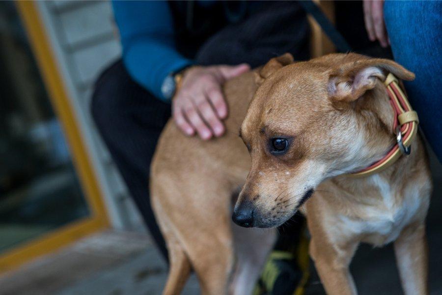 В Геленджике живодера за повешенных щенков наказали исправительными работами