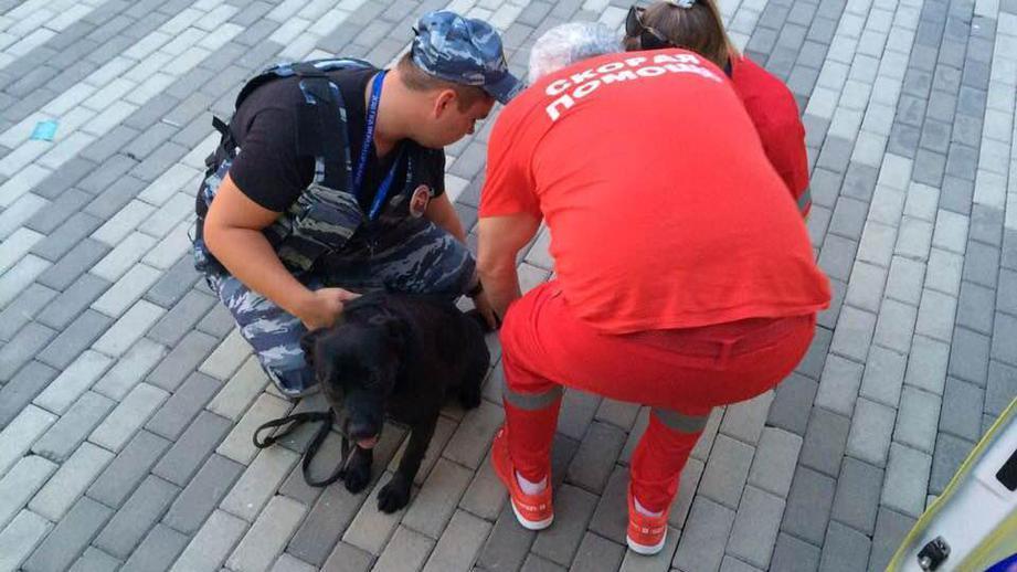 Полицейская собака получила ранение в Сочи на матче ЧМ-2018