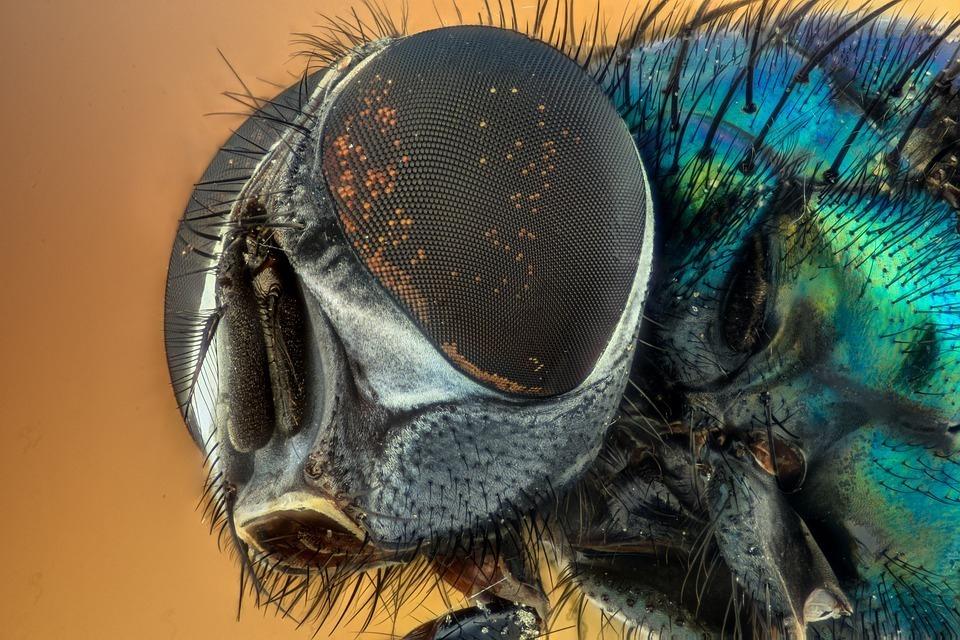 Усыпанные мухами дворы возмутили жителей Кубани