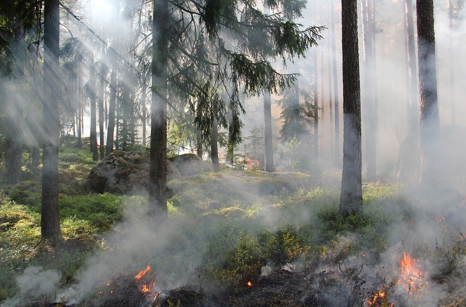 Лесной пожар под Новороссийском отнял у пожарных 18 часов