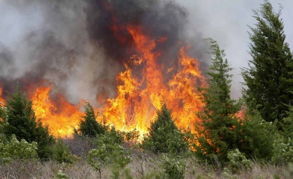В Краснодарском крае объявили наивысший класс пожароопасности