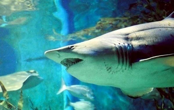 Краснодарский океанариум «Океан Парк» продают за 120 миллионов рублей