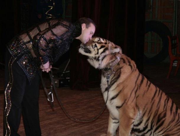 Тигр пропал из цирка после нападения на краснодарского дрессировщика