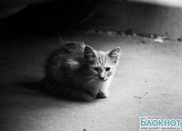 В Приморско-Ахтарске женщина осуждена за публичное убийство кота