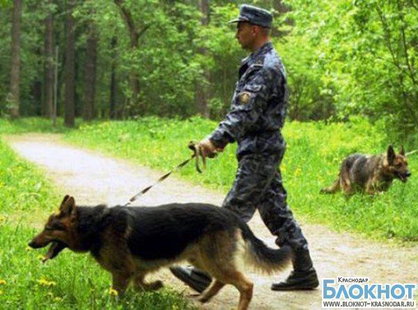 В Успенском районе нашли заблудившегося в лесу пенсионера