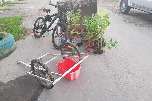 Краснодарского велосипедиста задержали с 21 кустом конопли