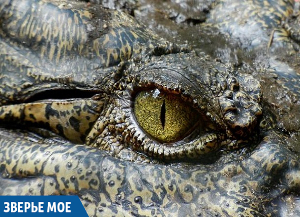 Из моря в Анапе достали крокодила