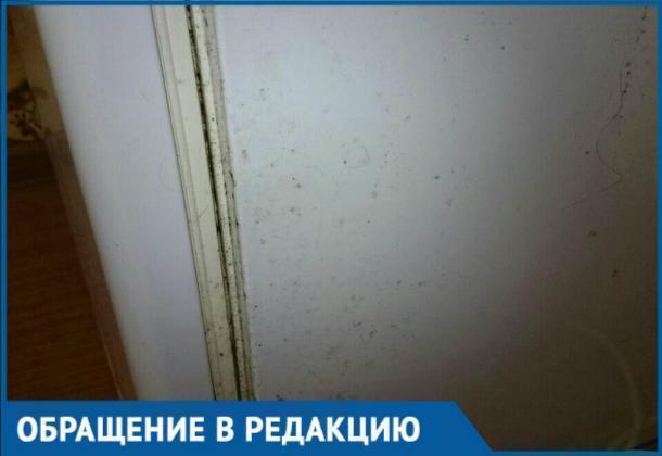 Плесень и холод – результат отопительного сезона в Краснодаре