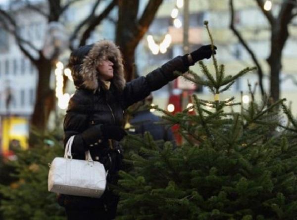 25-летний продавец елок обманывал своих покупателей в Краснодаре