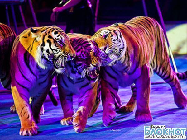 «Блокнот Краснодар» дарит пригласительные на цирковую премьеру