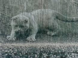 Экстренное предупреждение из-за дождей с градом объявлено на Кубани