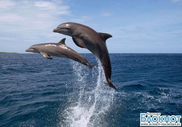 Крымских дельфинов и морских котиков поставят на службу в ВМФ России