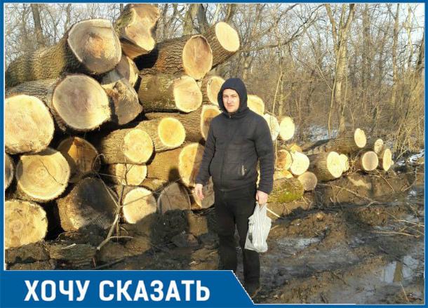 «Чистильщики леса»: на Кубани вероломно вырубают Старостаничный лес