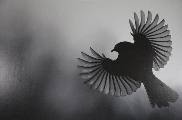 В Краснодаре открылась фотовыставка «Дикая природа России»