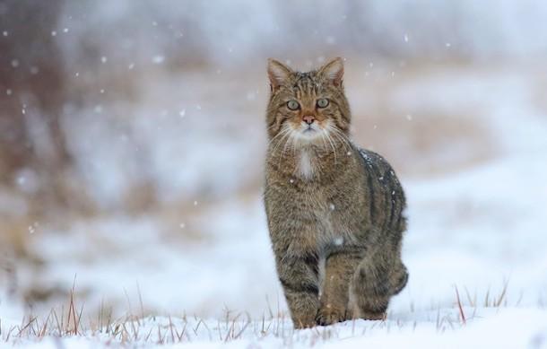 Мокрый снег обрушится на Краснодарский край