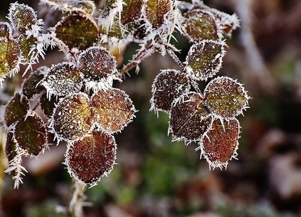 Экстренное предупреждение по заморозкам объявлено на Кубани
