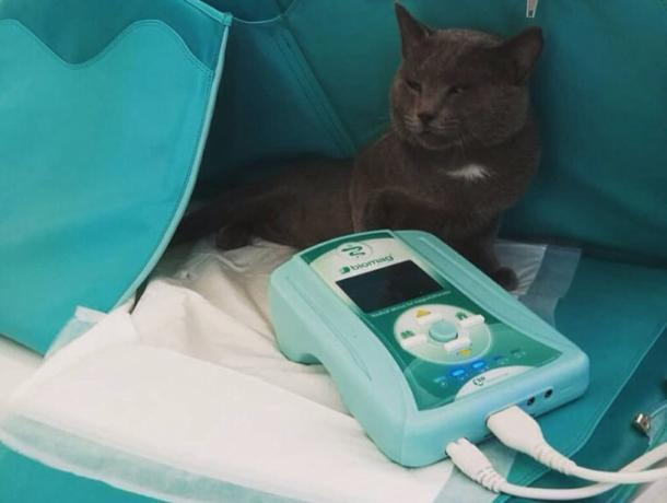 Новинка для Краснодара: ветклиника «Доверие» запустила магнитотерапию для животных