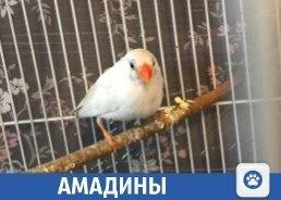 Милые птички продаются в Краснодаре