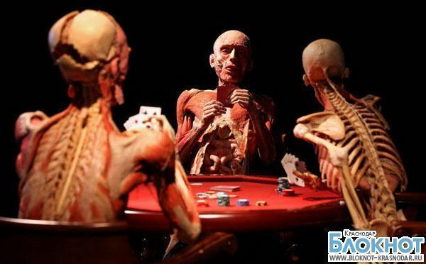 Скандальную анатомическую выставку в Краснодаре могут отменить