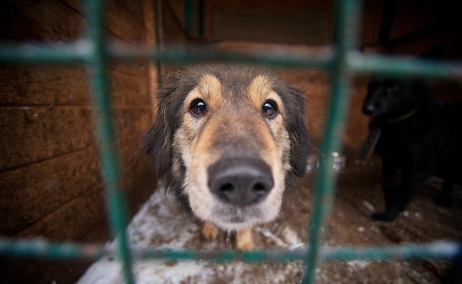 Приют для животных появится в Новороссийске