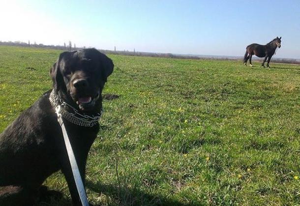 «Это моя собака и с ней все хорошо», - заявил хозяин помытого на краснодарской автомойке пса