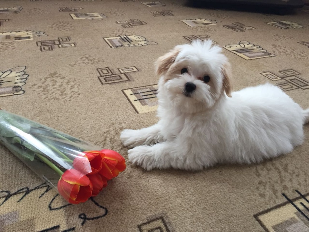 WhatsApp Image 2018-04-24 at 20.58.24 (1).jpeg