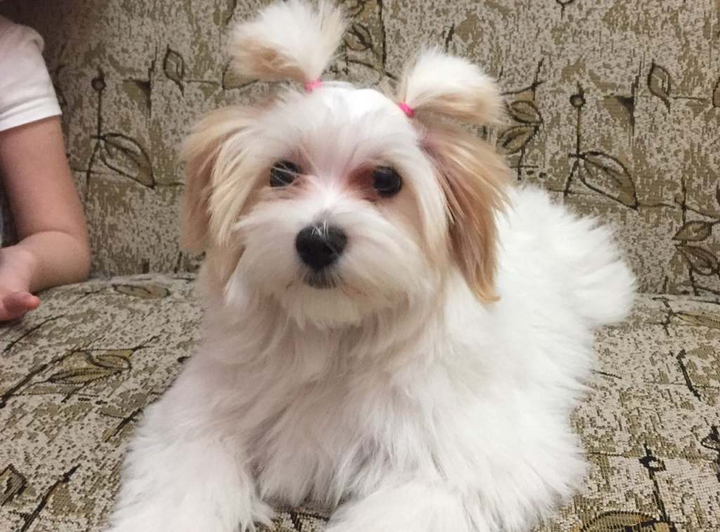 WhatsApp Image 2018-04-24 at 20.58.23.jpeg